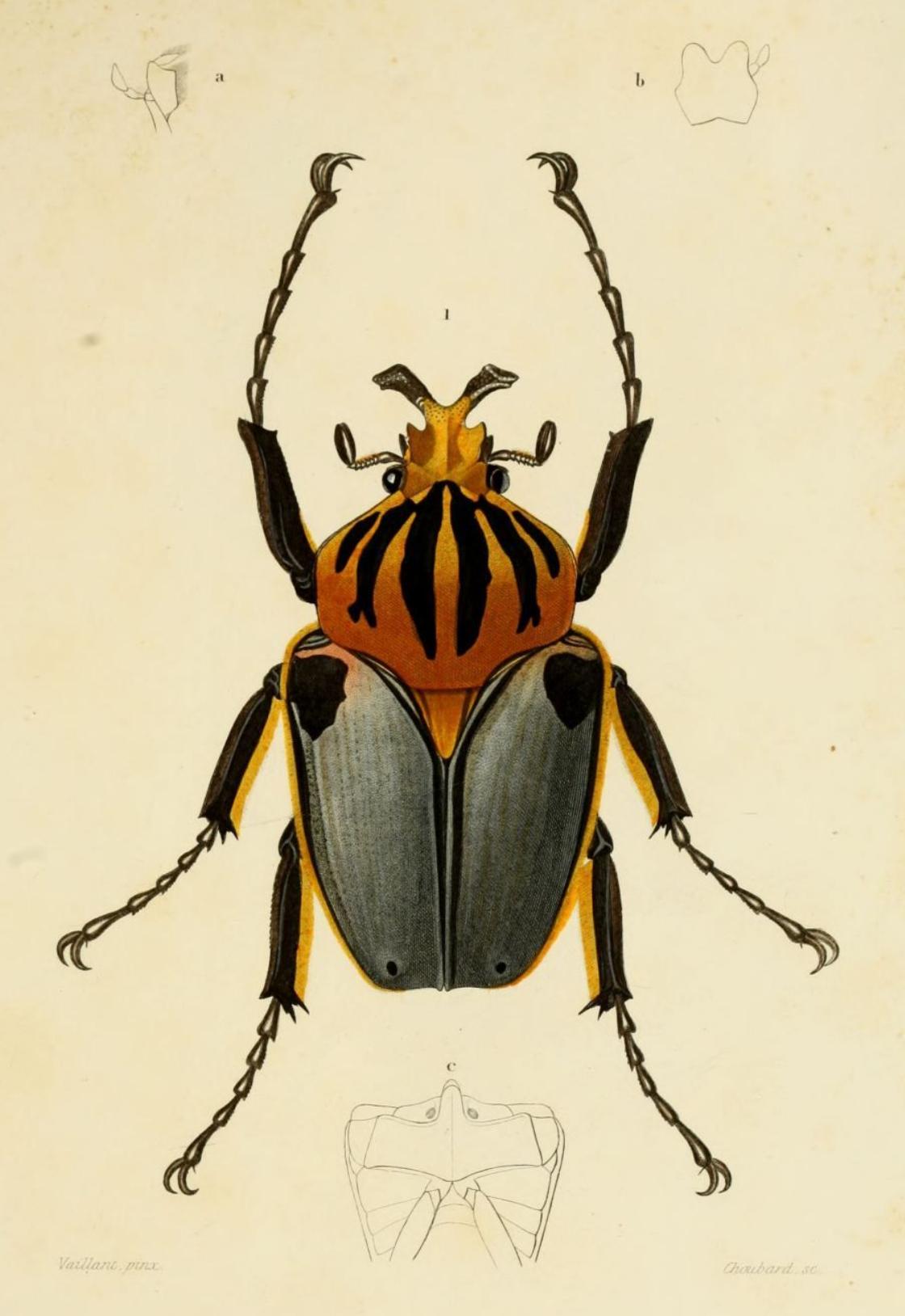 AtelierS Les insectes!