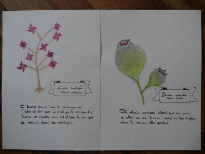 Herbier créé par Chloé Decavèle (4ème) ©